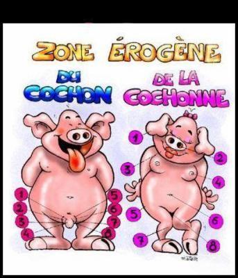 zone érogène du cochon